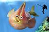 'Never look Back.' (RєRє) Tags: blue sea food fish playing silly art water goofy fruit fun with humor manga fruta exotic peixe mango mangoes peixinho mangos anthropomorphic mangue playingwithfood spearfishing anthropomorph antropomórfico mangobaum antropomorfico anthropomorphe brincandocomacomidablog