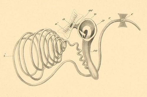 Mollusca c