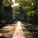 寺の一本道