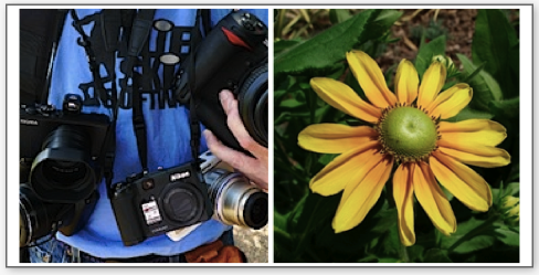 Download original files from four cameras, courtesy of Imaging Insider