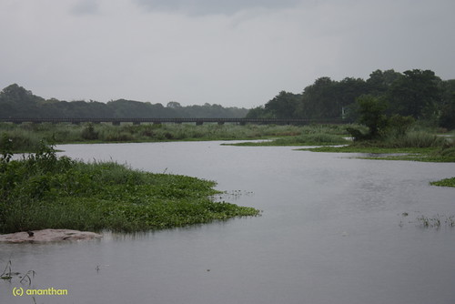 Thirunellai River