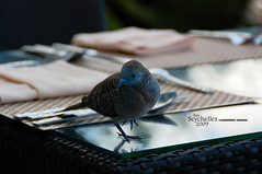 The Bird, seychelles (Dan & Luiza from TravelPlusStyle.com) Tags: resort seychelles banyantreehotel