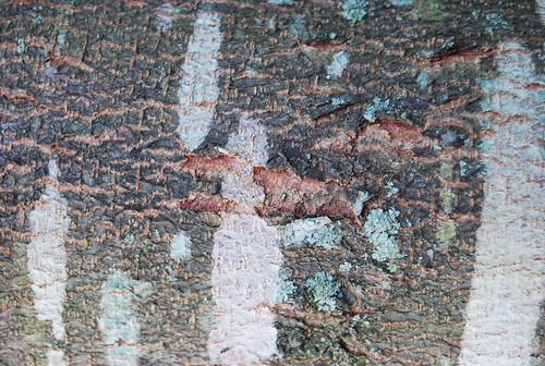 Tree Bark Texture 09
