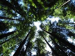 Mount Rainier - Ohanapecosh