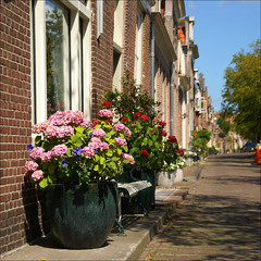 a Dutch street on a summerday............ (atsjebosma) Tags: street flowers houses holland dutch perspective thenetherlands explore zomer hydrangea enkhuizen bloemen dutchstreet straat hortensia summerday july2009 atsjebosma