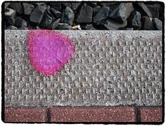 Still life (Marcel van Gunst) Tags: pink stilllife leave rose mas marcel marcelvangunst vangunst stilleven blad 2009 peuk