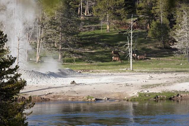 Elk by a River