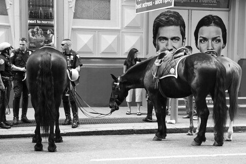 Police horses, 45th Street NYC