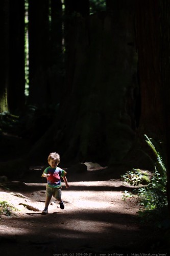 walking in the humboldt redwoods - _MG_1033