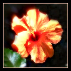 """""""Embrace the light of your path."""" (martian cat) Tags: macro hibiscus allrightsre"""