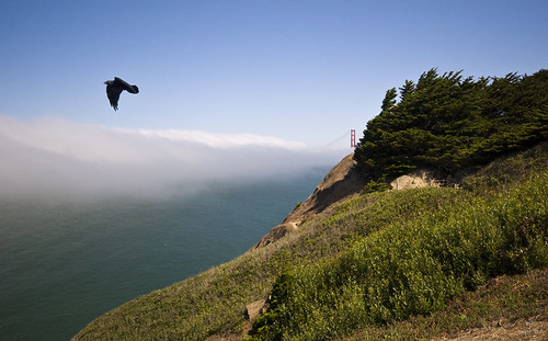 Raven over the Golden Gate