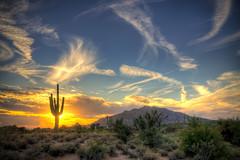 Saguaro Sol [Explore #1!]