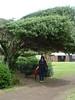 The bendy tree