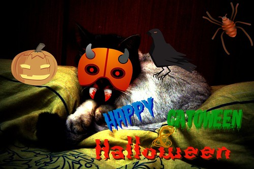Happy Catoween and Halloween!
