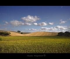 Sunflower fields - Alentejo- Portugal (Nöé) Tags: sun portugal sunflower campo fields alentejo girasol noe nöe nöé noeliamagnusson wwwnoeliamagnussoncomnöénoemagnusson nöémagnusson