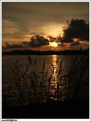 Sunset at Sepangar Bay, Kota Kinabalu (sam4605) Tags: sunset sun grass landscape ed scenery olympus malaysia borneo kotakinabalu e1 sabah kota kinabalu pemandangan matahari zd lanskap sabahborneo 1442mm sepangar sam4605 teluksepangar