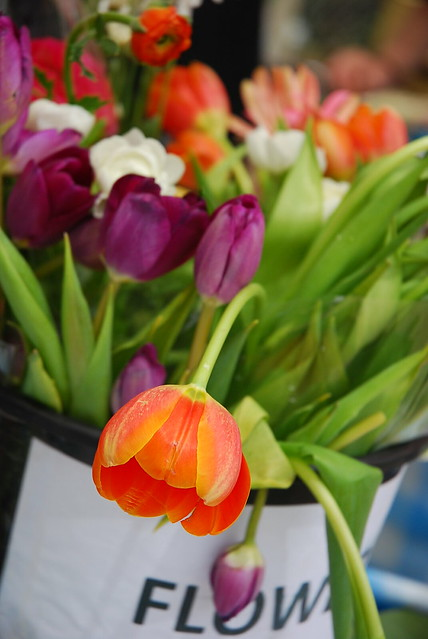 tulip anyone?
