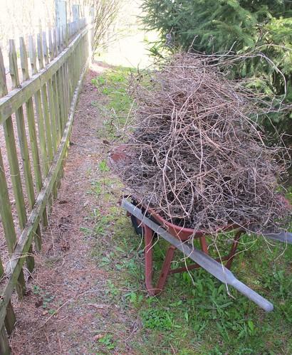 last years vines
