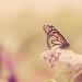 Spring Butterfly by Kristybee