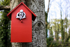 Operation Cuckoo (Stfan) Tags: red house tree bird nid canon garden toy rouge actionfigure eos starwars nest outdoor stormtroopers jardin birdhouse stormtrooper trunk figurine maison oiseau jouet coucou hasbro project365 450d stormtroopers365