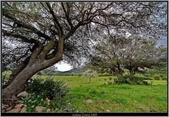 Paisaje de Cerdea (vfr800roja) Tags: sardegna landscape nikon paisaje lightroom arzachena d700 malchittu tff1 tonitorres