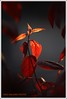 ILUMINACION (DIAZ-GALIANO) Tags: light flower canon natural galiano flor 30d mywinners rubyphotographer thebestofcengizsqueezeme2groups ¨70200