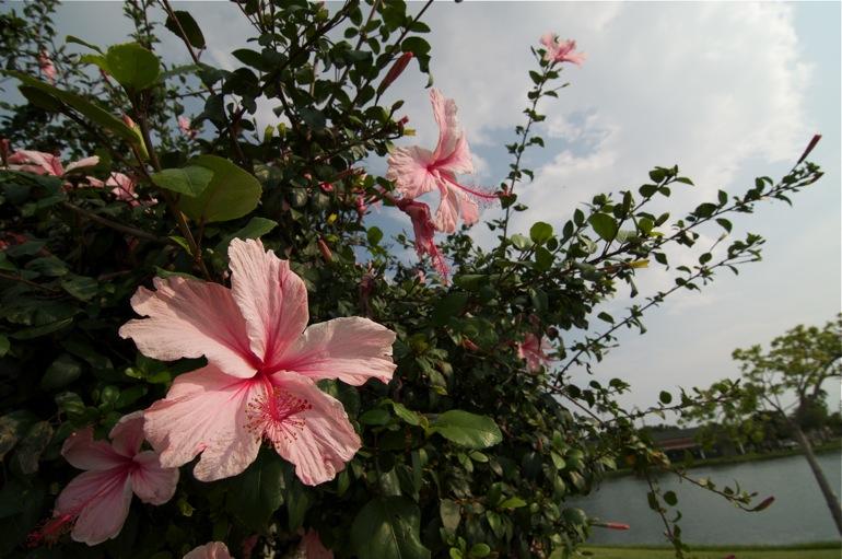 flower_0057