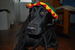 raggamuffin dog (Irantzu Majabais) Tags: dog dreadlocks power perro german jamaica reggae dreads pastor rasta dreadlock aleman sheperd ragamuffin rastas