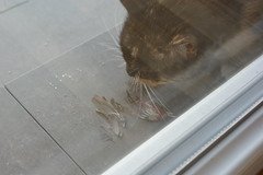Mycha (c0de) Tags: kot wrbel niadanie