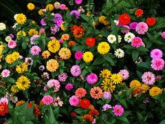 Colors of Summer (bish_s) Tags: travel flowers flower colors sanantonio lumix texas tx riotofcolours fz28 dmcfz28