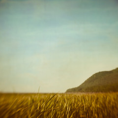 One of these mornings (IrenaS) Tags: landscape lensbaby charlevoix quebec marsh mountain