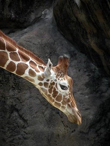 zoo 128