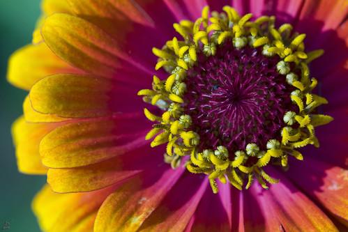 Floral Color Blast