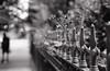 (m. wriston) Tags: city flowers light summer urban blackandwhite bw plants usa white black film nature contrast analog 35mm fence dark outdoors 50mm flora shadows dof asahi pentax takumar bokeh f14 shapes maryland super baltimore mount sp pre 400 diafine spotmatic analogue vernon underexposed 1250 selfdeveloped arista autaut