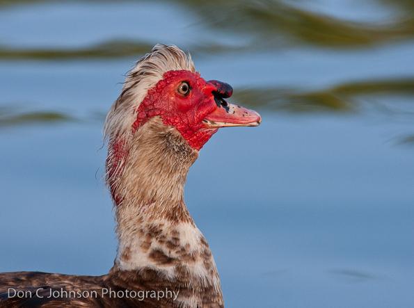 duckpond-106