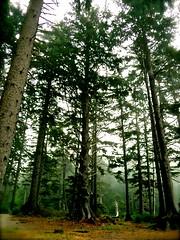 Oswald Forest (M-E-G-S) Tags: travel trees nature oregon forest scenery peace westcoast oswald oswaldstatepark smallmoments anawesomeshot diamondclassphotographer spiritofphotography