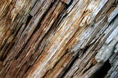 (Woollyknickers) Tags: wood orange brown white detail macro nature closeup grey rust natural teak warmtones