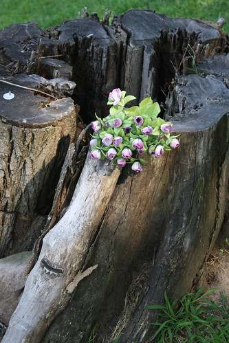 flower stump