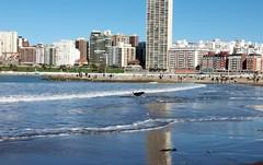 La orilla azul (Mirilamadrid) Tags: argentina mar playa arena perro reflejo olas mardelplata orilla mirilamadrid ciudadfelz
