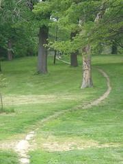 Forest Park Desire Path