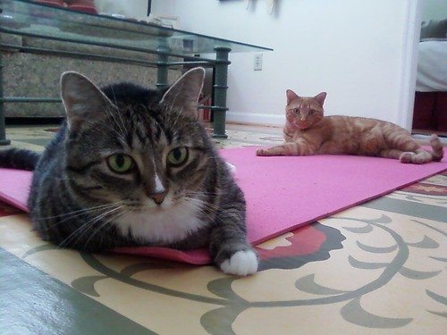 Trying to do yoga around these two