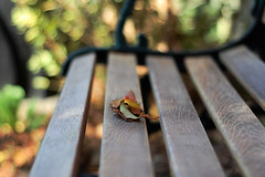 autmn colours (James Green Photography) Tags: wild leaves bench 50mm bush nikon colours bokeh deadleaves ground f18 18 autmn d40