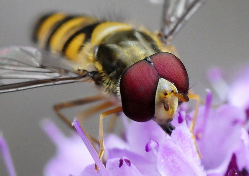 Collecting Nectar Points