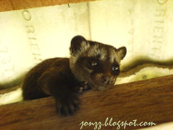 civetcatbaby