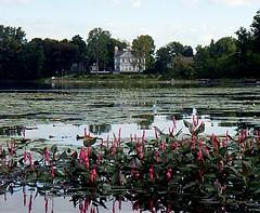 Waterplants in bloom, Parc de la Rivière-des-Mille-Îles