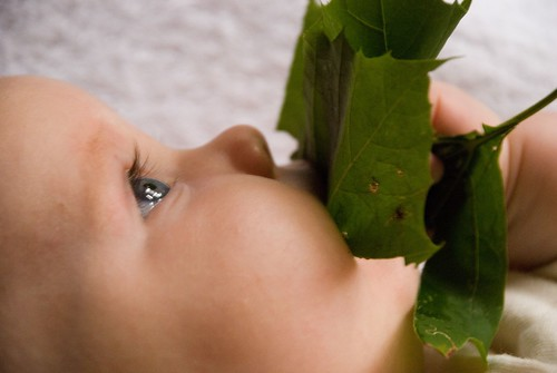 finn and the leaf
