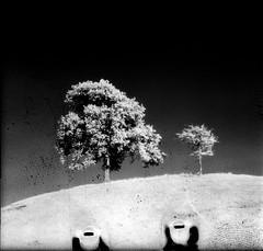 [E l e v e n] (uderaglassbell) Tags: 120 film mediumformat ir pentax kodak hill grain 11 infrared 6x7 serendipity stark scratched xi hie 105mm p67 underaglassbell smctakumar105mm faoo aerographicinfrared