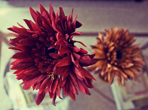 fallflowersthree