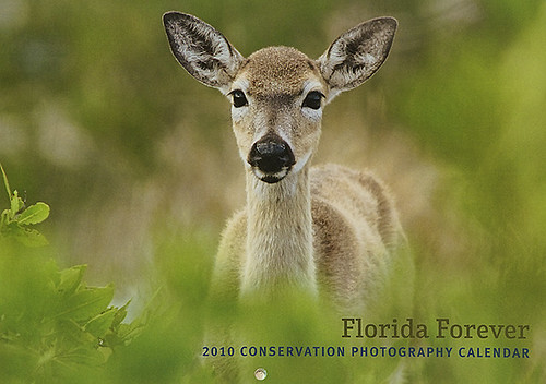 Florida Forever 2010 Conservation Photography Calendar