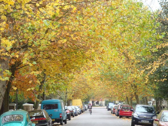 Automn colors my street end October